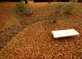 落ち葉のジュータンの写真・画像素材[1609672]