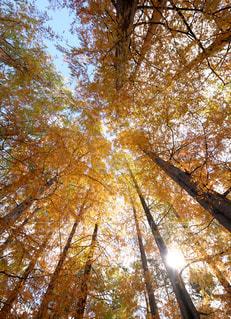 紅葉に囲まれて。の写真・画像素材[1614672]