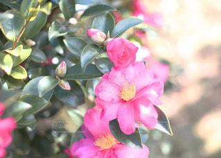 冬の庭の色の写真・画像素材[1645123]