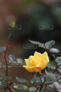 yellow  roadsの写真・画像素材[1655369]
