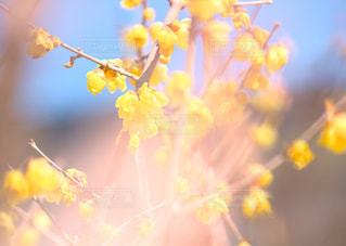 甘い香りを庭いっぱいに。の写真・画像素材[1809500]