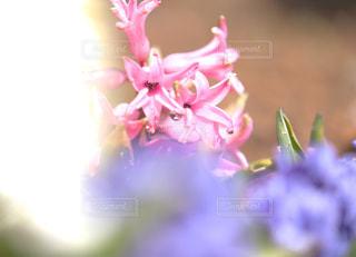 庭を彩るお花達の写真・画像素材[1879423]