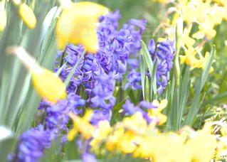 庭を鮮やかに彩る沢山のお花達の写真・画像素材[1879425]
