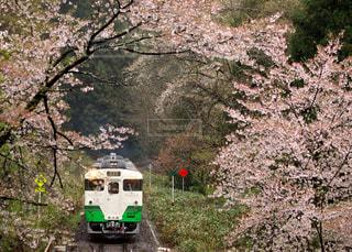 雨で舞い散る桜のトンネルを走る只見線の写真・画像素材[2121824]