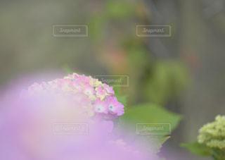 小さな公園の彩りパステルカラーの写真・画像素材[2234516]