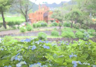 公園と紫陽花の写真・画像素材[2293072]