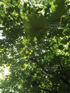 木。枝と葉 - No.1107750