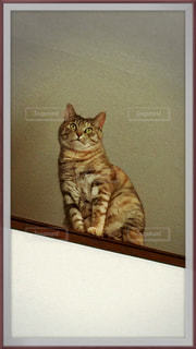 油絵のような猫の写真・画像素材[1107762]