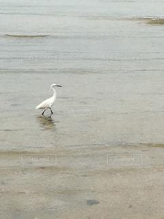 白鷺の写真・画像素材[129449]