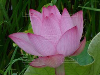 花の写真・画像素材[161629]