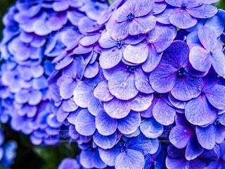 花の写真・画像素材[57123]