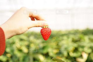 近くに果物を持っている手のアップの写真・画像素材[1027972]