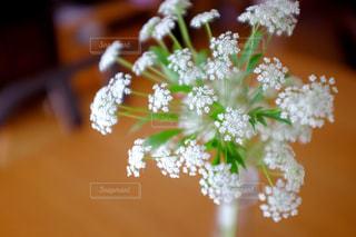 テーブルの上にある小さく白い花の写真・画像素材[1136312]