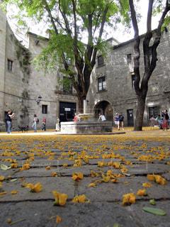 石畳みの上に広がる黄色い花びらの写真・画像素材[1165953]