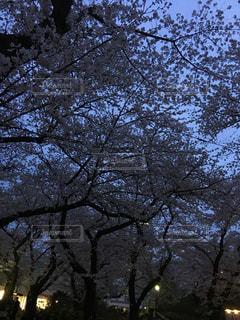 近くの木のアップの写真・画像素材[1109561]