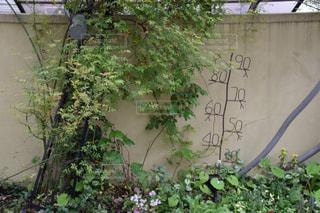 庭先のの写真・画像素材[1109474]