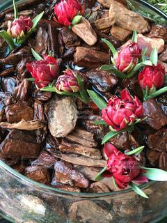 赤い花と流木の写真・画像素材[1109100]