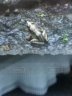 水の動物の写真・画像素材[1110122]