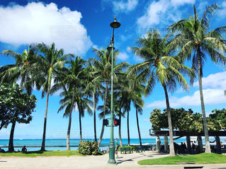 Hawaii ヤシの木とビーチの写真・画像素材[1110202]