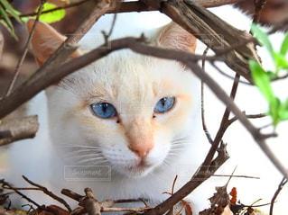 美しい野良猫の写真・画像素材[1114645]