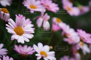 花に幸せが溢れてるの写真・画像素材[1167630]