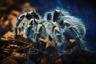 ペット王国にいた蜘蛛の写真・画像素材[1170097]