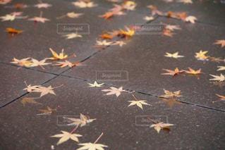 秋の終わりの写真・画像素材[1656095]