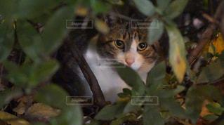 夜の野良猫の写真・画像素材[1658497]