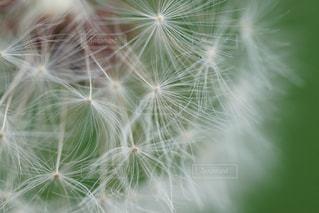 花の写真・画像素材[2039223]
