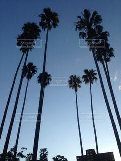 ヤシの木のグループの写真・画像素材[1125629]