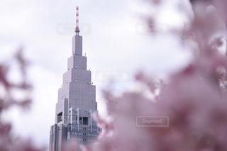 桜のフレームの写真・画像素材[1111151]