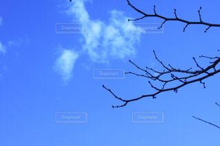 木の枝と青空の写真・画像素材[1111516]