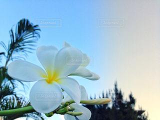 近くに黄色い花のアップ - No.1118276