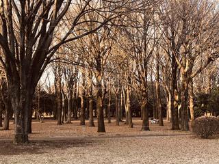 代々木公園の冬の写真・画像素材[3011957]