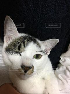 猫だっておしゃれしたい!の写真・画像素材[1111997]