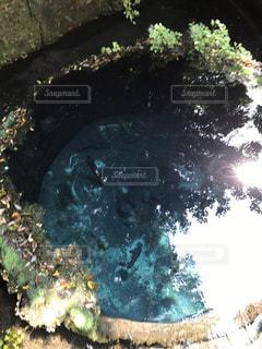 湧き水の写真・画像素材[1112238]