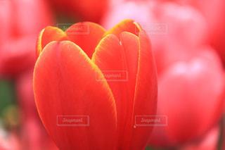 お花の原点の写真・画像素材[1120064]
