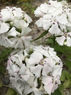 変わった形の花 - No.1191689