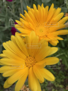 名も知らぬ花の写真・画像素材[1191695]