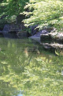 新緑の季節の写真・画像素材[1210564]