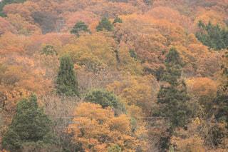 三毛山 - No.1246366