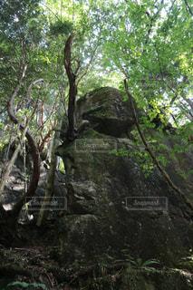 森林浴の写真・画像素材[1285270]