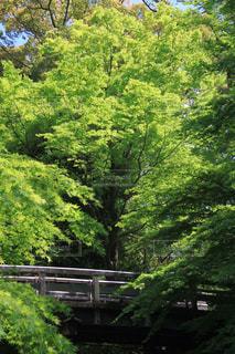 森林浴の写真・画像素材[1286999]