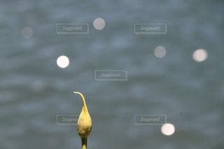 皆輝いての写真・画像素材[1307982]