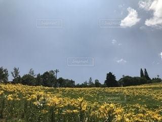 大自然の写真・画像素材[1322842]