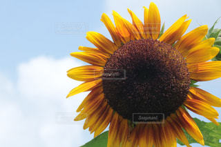 夏だよーの写真・画像素材[1375396]