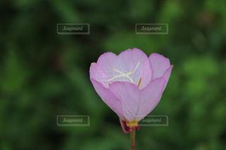 近くの花のアップの写真・画像素材[1385984]
