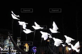 飛翔の写真・画像素材[1394155]