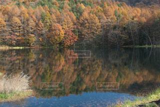 池も紅葉の写真・画像素材[1429335]