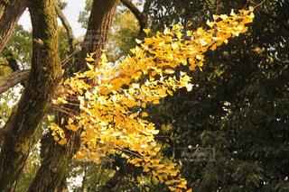 秋の知らせ。の写真・画像素材[1437507]
